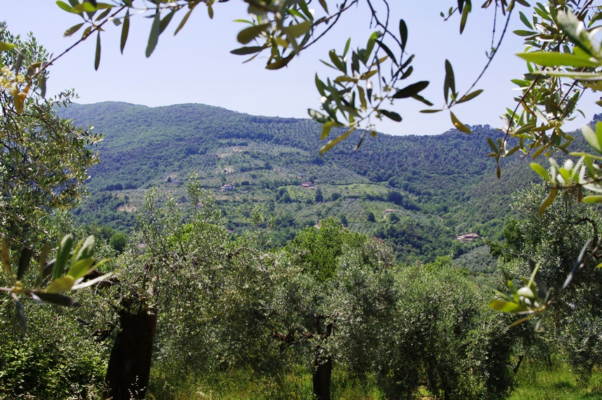 olive oil tours near rome italy